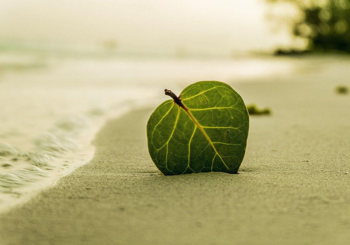 beach-394503_1280(1)